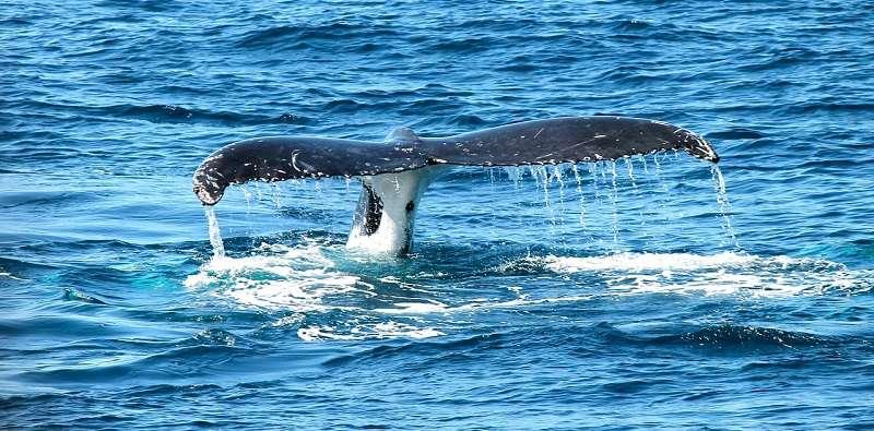 ver ballenas en tenerife