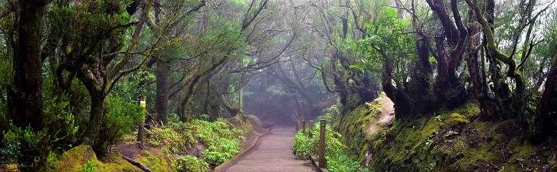 anaga tenerife bosque encantado